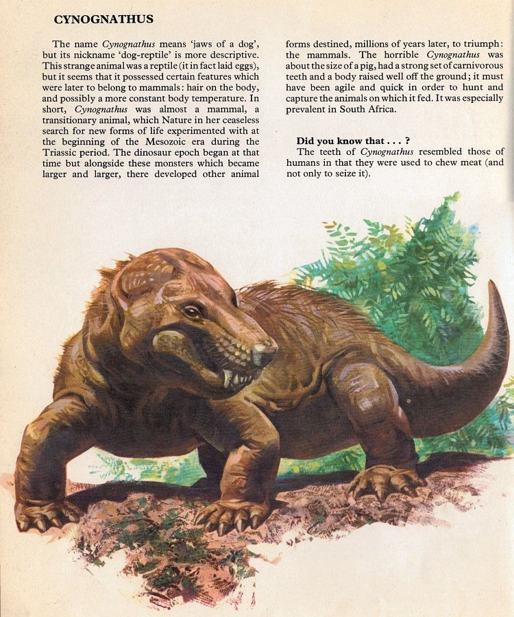 Given the quality of the illustrations, I couldn't possibly feature only the dinosaurs from Prehistoric Animals (part of the Private Lives... #prehistoricanimals