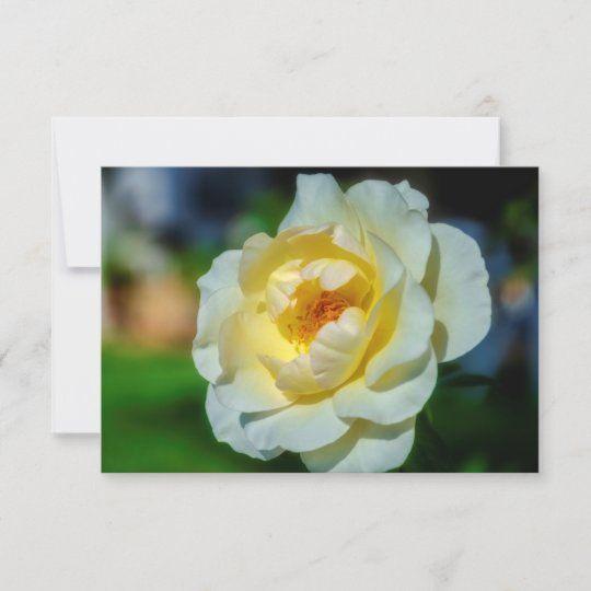 Tarjeta de felicitación con una gran rosa blanca