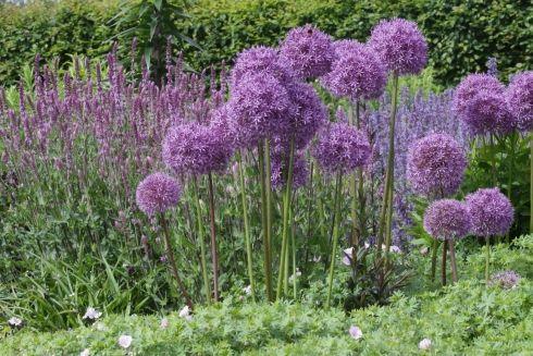 garten blumen stauden – siddhimind, Gartenarbeit ideen
