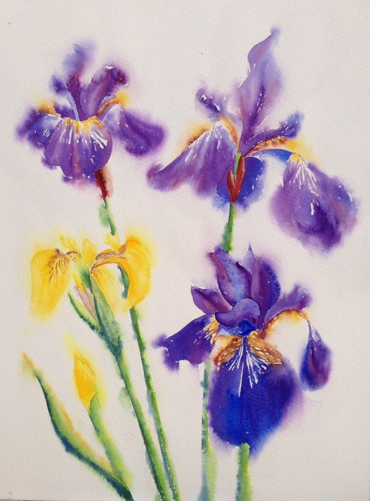 Artfinder purple gold by jill griffin irises are my