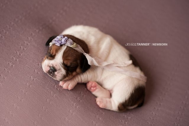 Puppy Newborn Goodness Newborn Puppies Puppy Photography Puppies