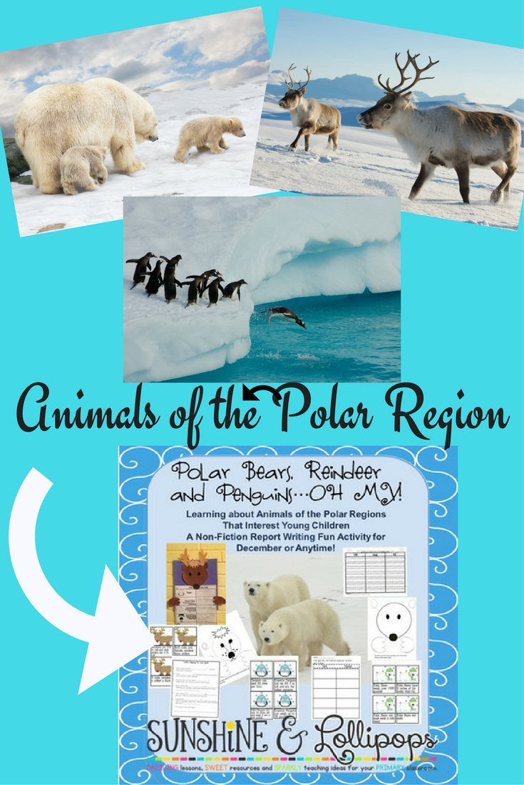 Winter Activities Animals of the Polar Region Polar Bears, Reindeer ...