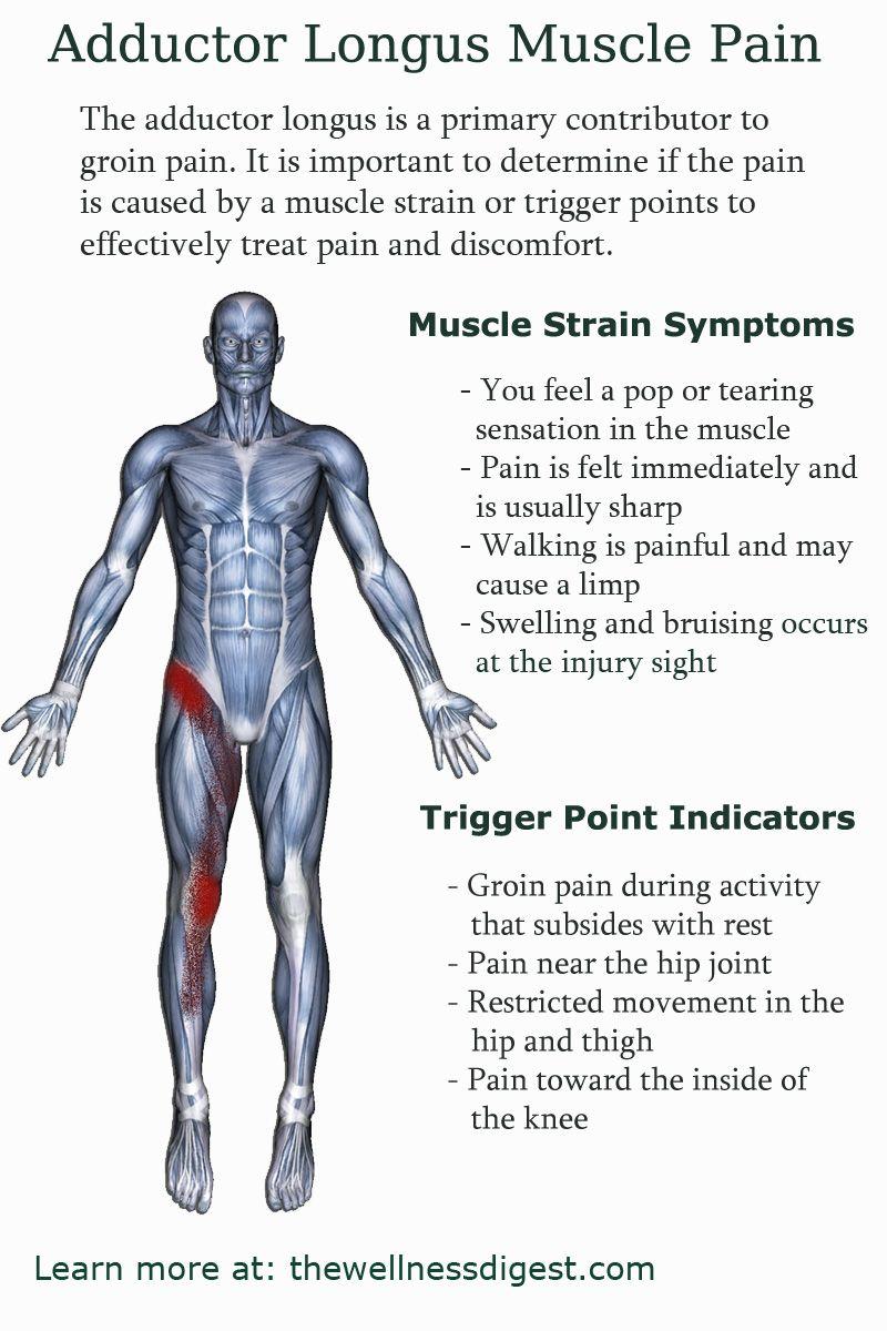 Pin On Upper Leg Muscles