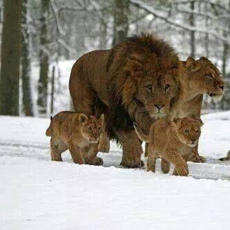 ice-lion