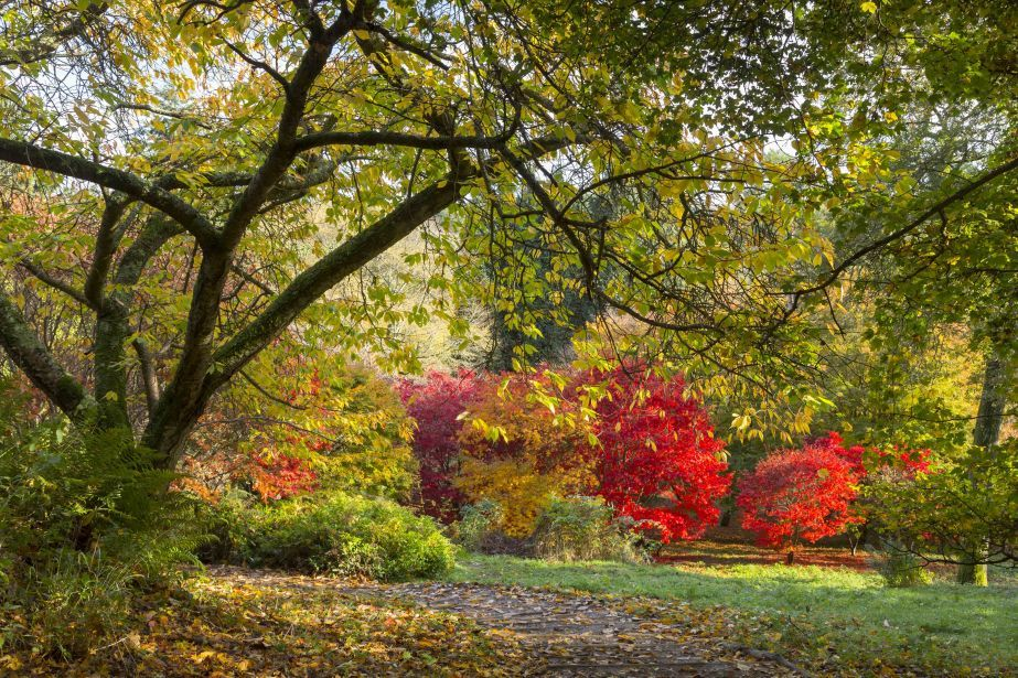 Slideshow Top 8 Places To See Autumn Leaves Around The World By Mark Beech Image 1 Blouin Artinfo Premier Global Online Destination For Art And