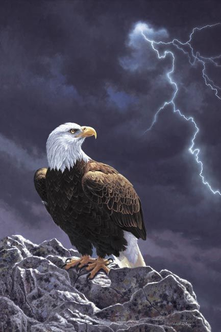American Bald Eagle - Painting | The Land of the Free and the Home ...