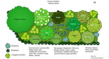 This Is An Example Of A Food Forest Design From The Slovak Centre Food Forest Food Forest Design Permaculture Gardening Food Forest Garden