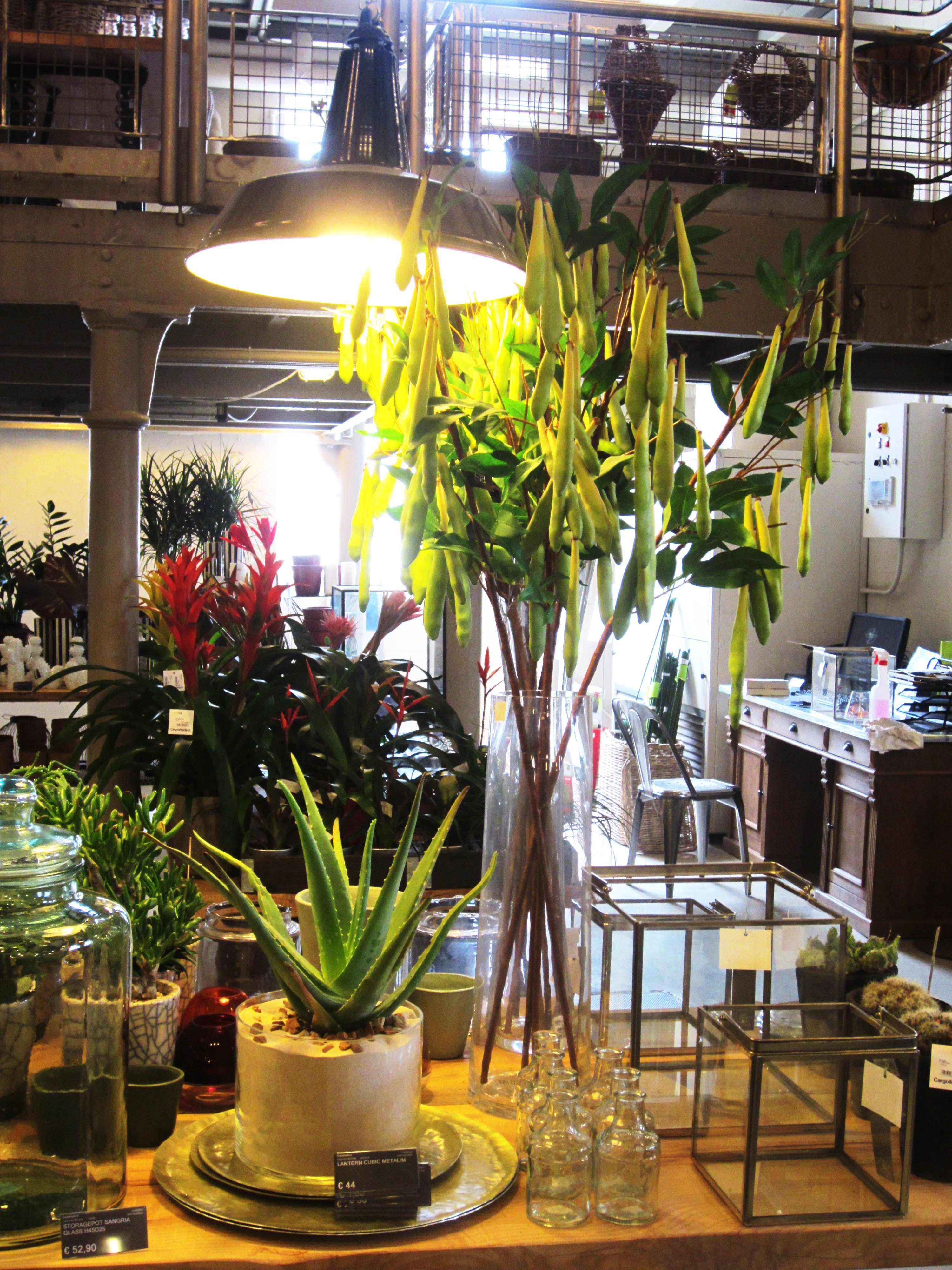 Garden and decoration department in cargo store via for Cargo via meucci