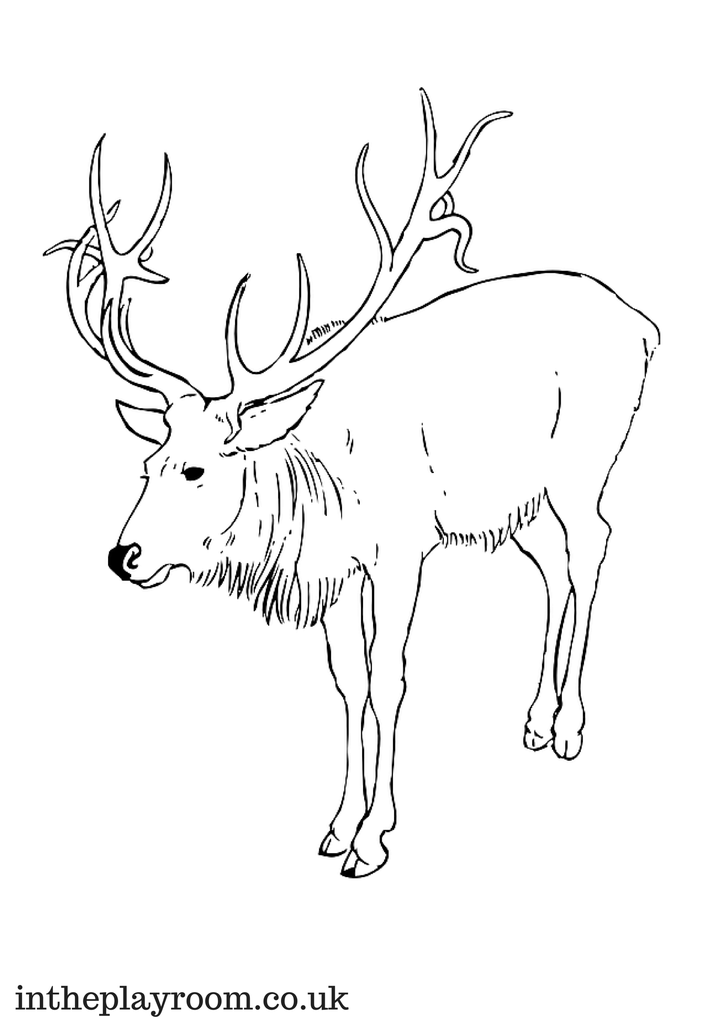 Arctic Animals Colouring Pages Animal coloring pages