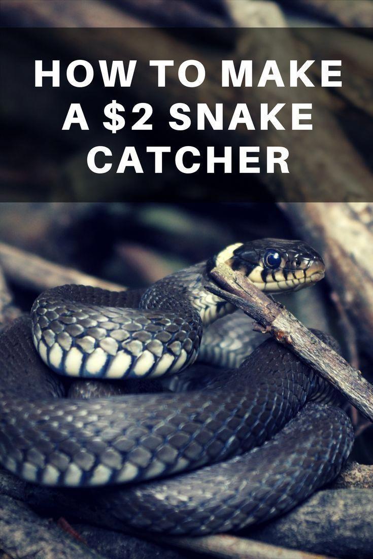 How to Make a 2 Snake Catcher Snake, Diy pest control