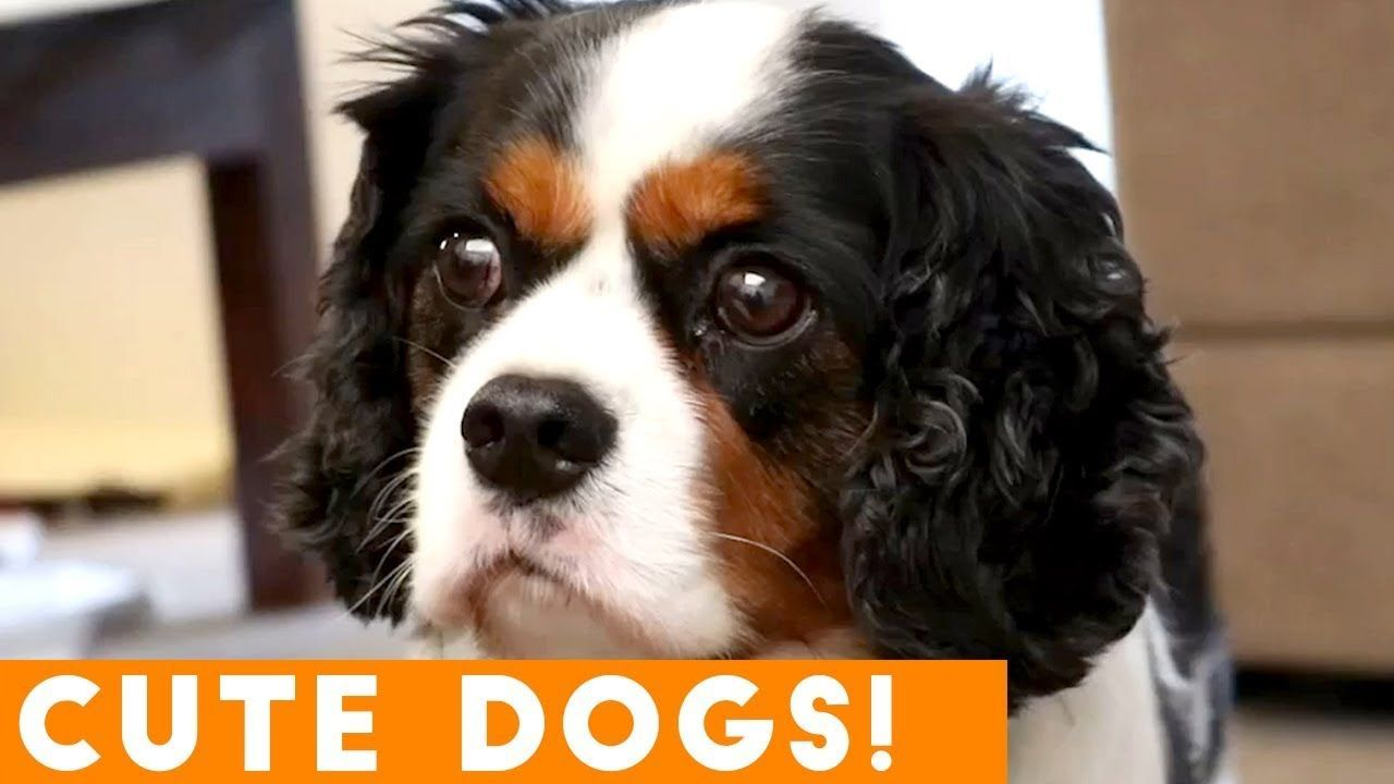 Ultimate Funniest Dog Puppy Compilation Try Not To Laugh March