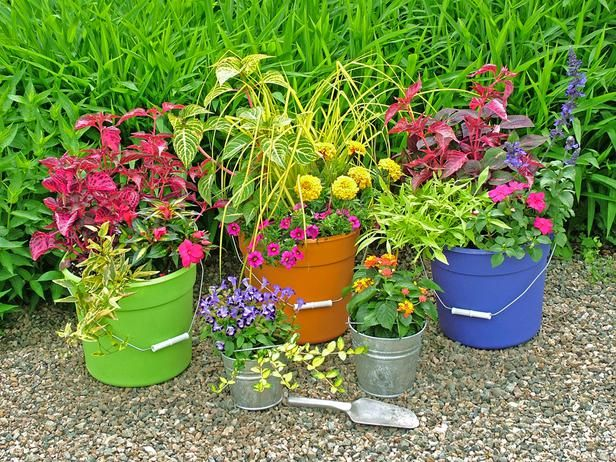 Stunning Low Budget Container Gardens : Outdoors : Home U0026 Garden Television  I Love The Different Colors Of The Buckets