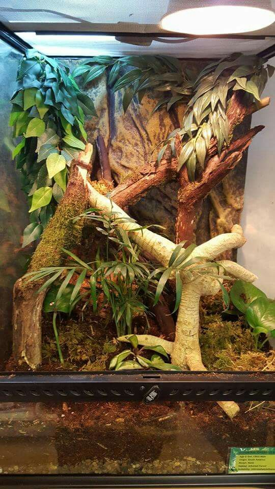 By Ewan Bennett at the Living Room Zoo | Vivariums, Terrariums ...