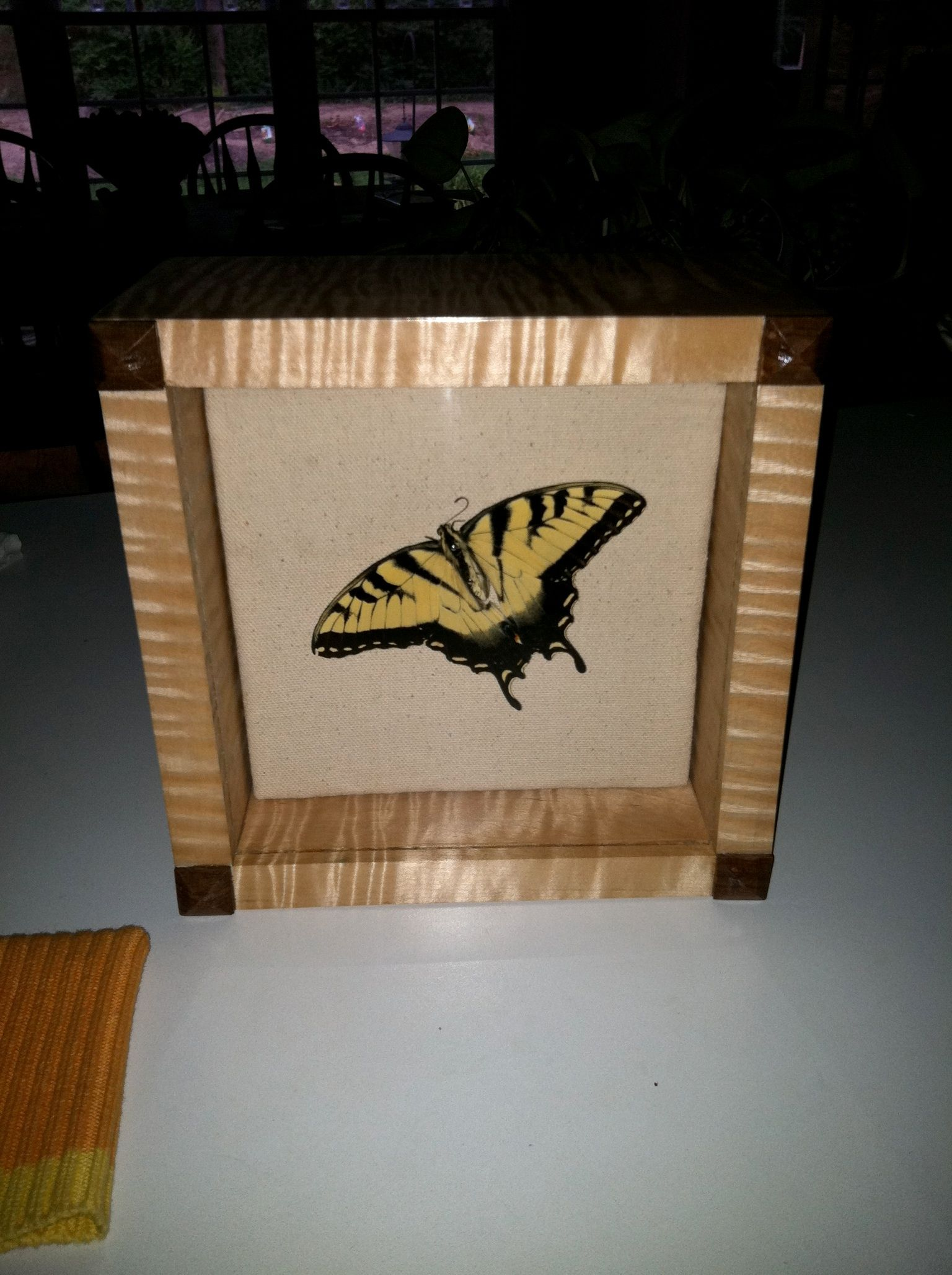 butterfly in curly maple shadowbox