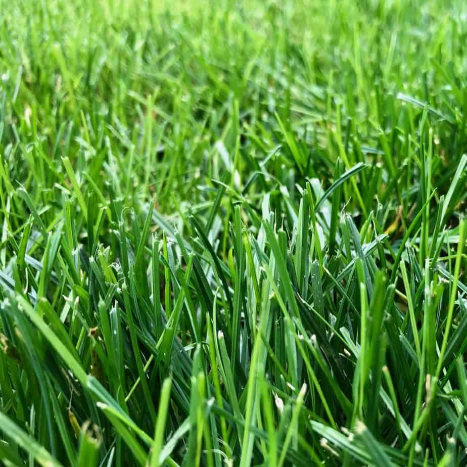Lawn Care: The Basics of Lawn Maintenance - Home for the Harvest