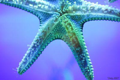 Starfishyyy.
