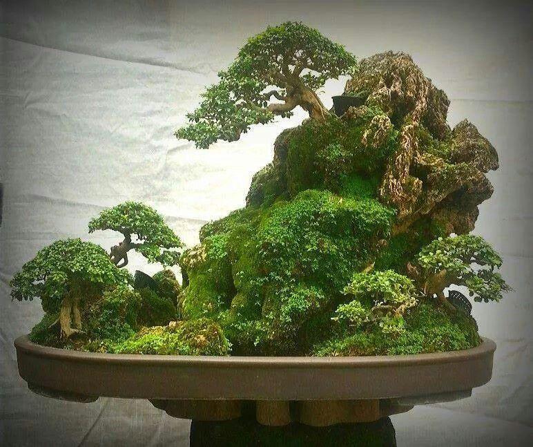 Pin de maco espino en bons i pinterest bonsais bonsai for Bonsai de jardin