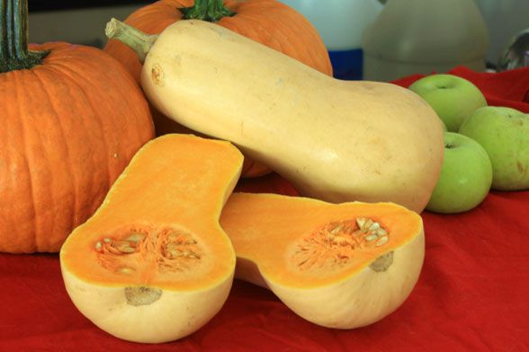 Put Some Butternut Squash on Your Plate | HGTVGardens