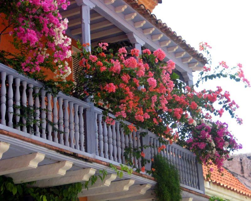 Balkonblumen Fur Sonnige Standorte Charmante