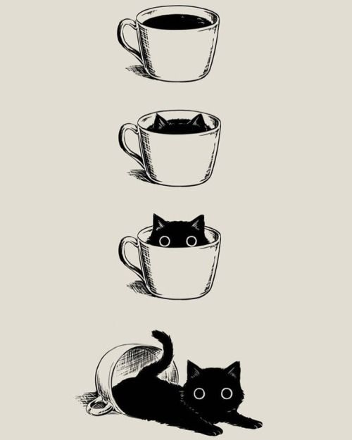 Black cat's