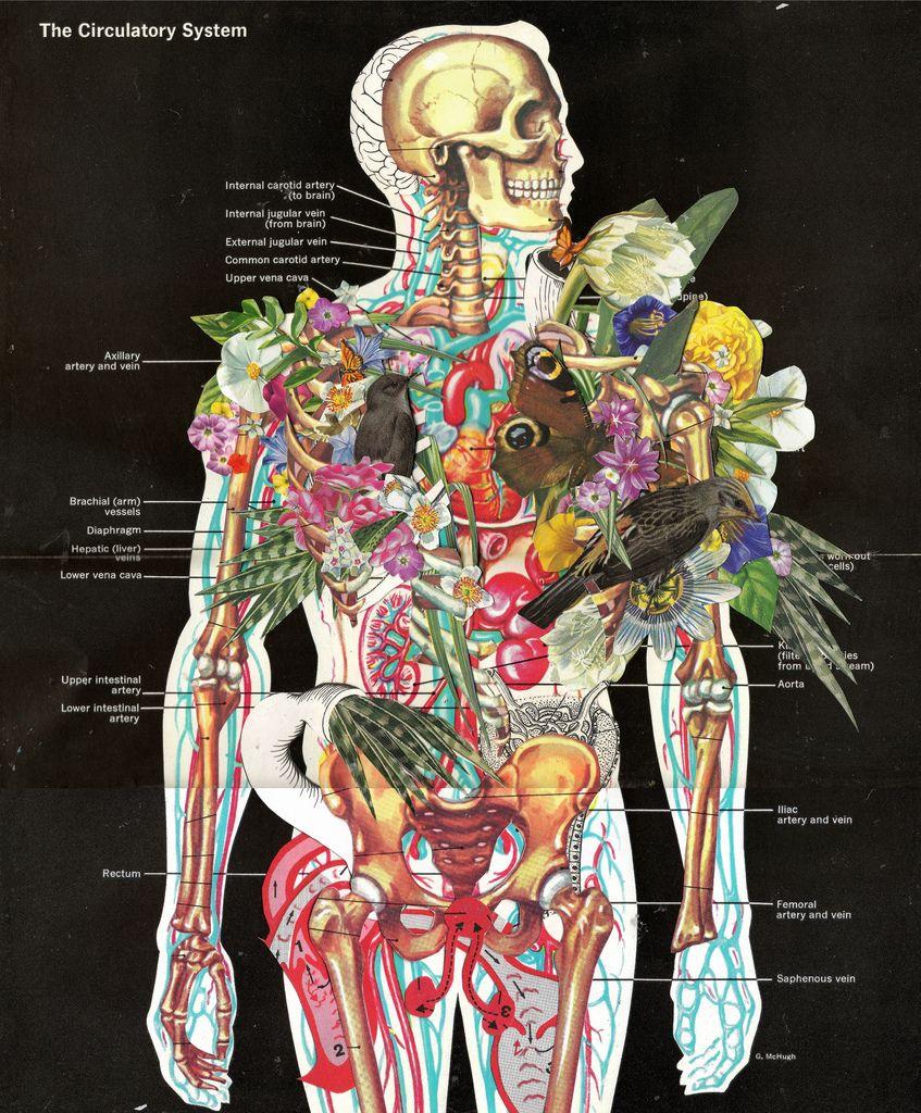 BEN GILES, COLLAGES | Diciembre. | Pinterest | Anatomía, Enfermería ...
