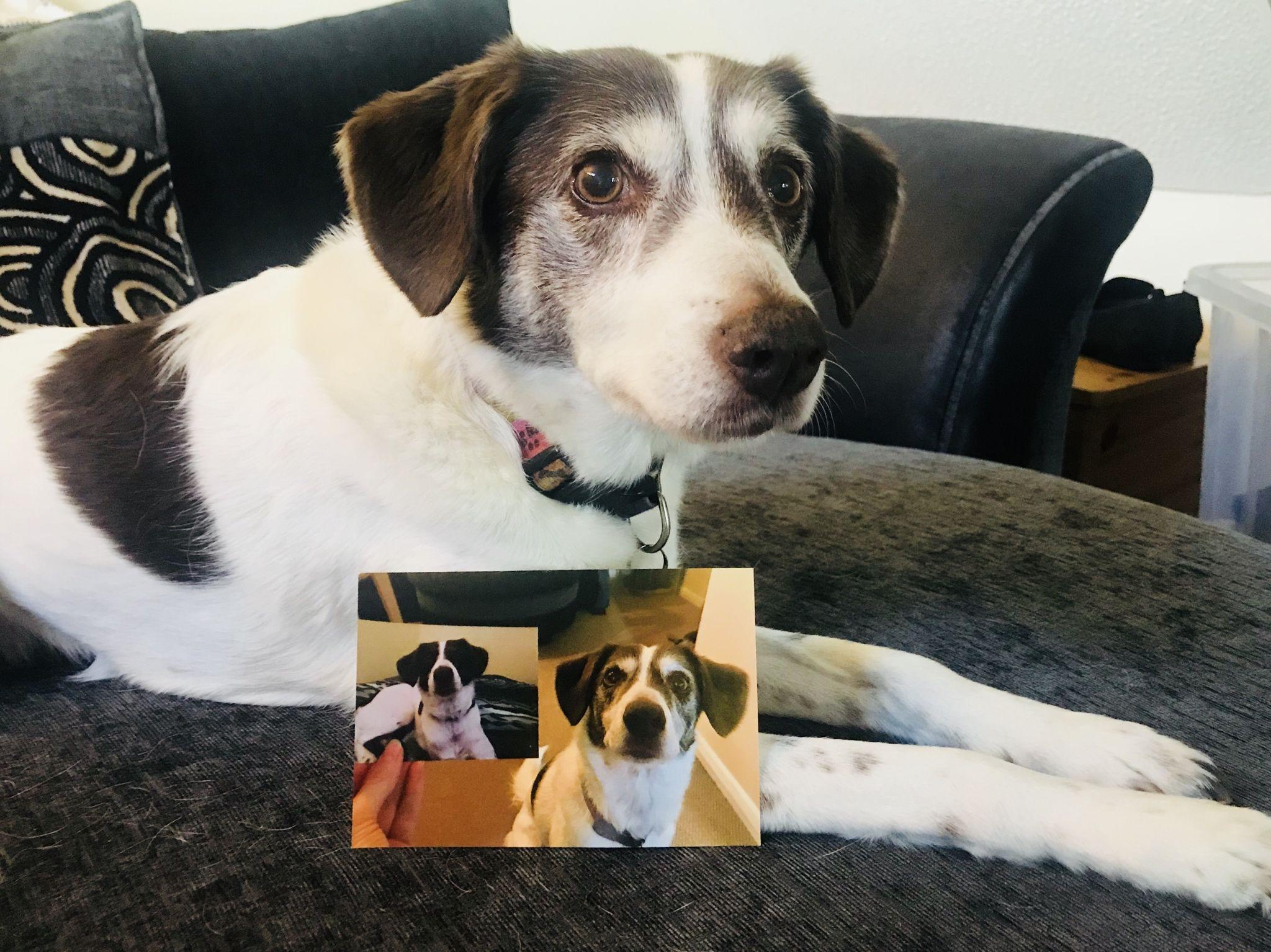 Inception Birthday Doggo (Astra Aged 2 8 And 13 (Today))
