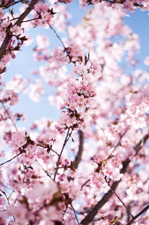 Pin By On In 2019 Spring Flowers Wallpaper Flower