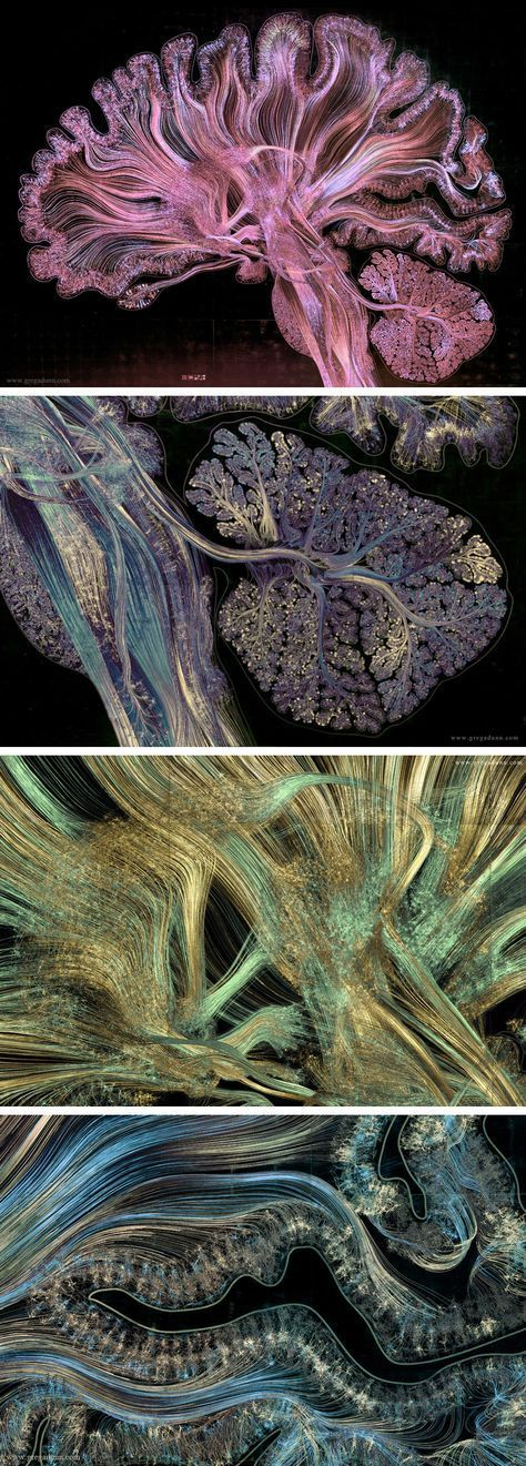 An Intricate Cross-Section of the Brain Depicted With Thousands of ...
