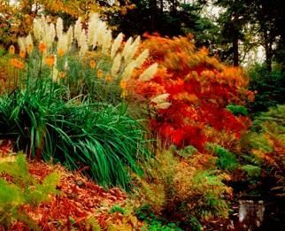 How To Divide And Transplant Ornamental Grasses Ornamental