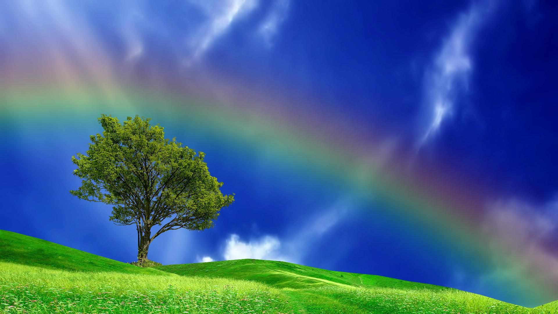 Pin by rose marie on somewhere over the rainbow pinterest rainbows field wallpaper summer sky rainbows beautiful beautiful fields trees cats voltagebd Gallery