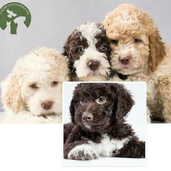 Pin von Abby auf Puppies Hunde, Tiere, Bilder