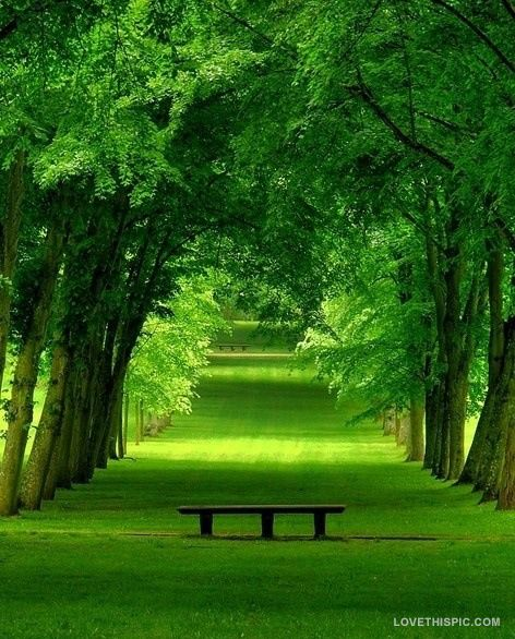 Amazing Scenery: Spring Green Scenery Spring Http://www.mkspecials.com