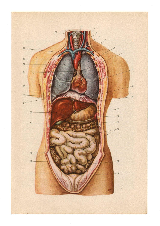 "artornap: "" Anatomical Prints Vintage Medical Diagrams skull ..."