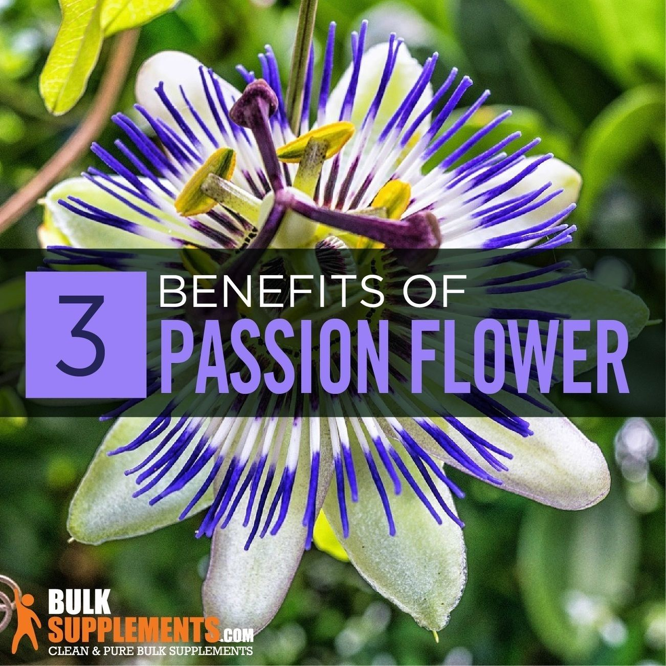 Passion Flower Extract Benefits Side Effects Dosage Passion Flower What Is Passion Restorative Sleep