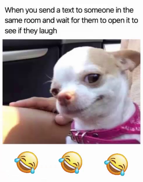 Funny Dog Memes To Cheer You Up On A Bad Day Dog Memes Funny Dogs Funny Dog Memes