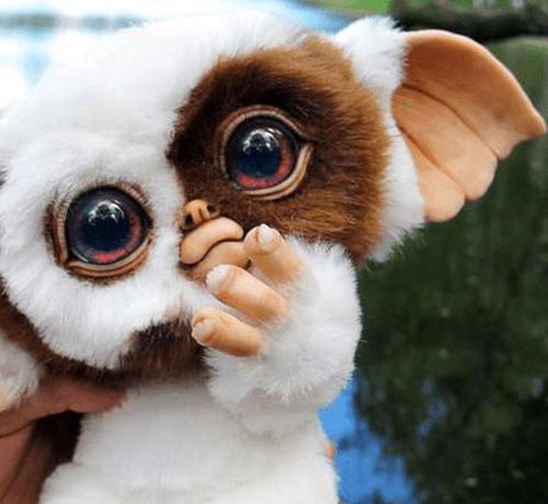 Venez Adopter Une Adorable Petite Boule De Poile Les Gremlins Sont A Adopter Sur Notre Site Le Refuge D Erard Les Gremlins Gremlins Animal Fantastique