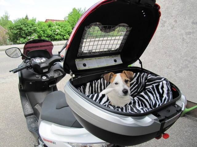 bbb7d64661c This IS a pet carrier! #vespa #vespahartford #scooter #scootercentrale #fun  #summer #smile #pooch