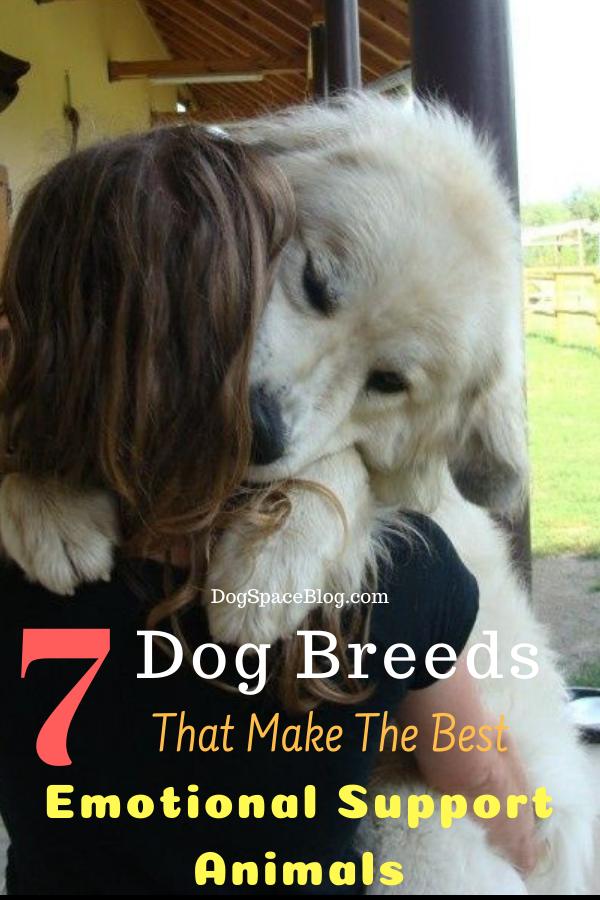 7 Dog Breeds That Make The Best Emotional Support Animals