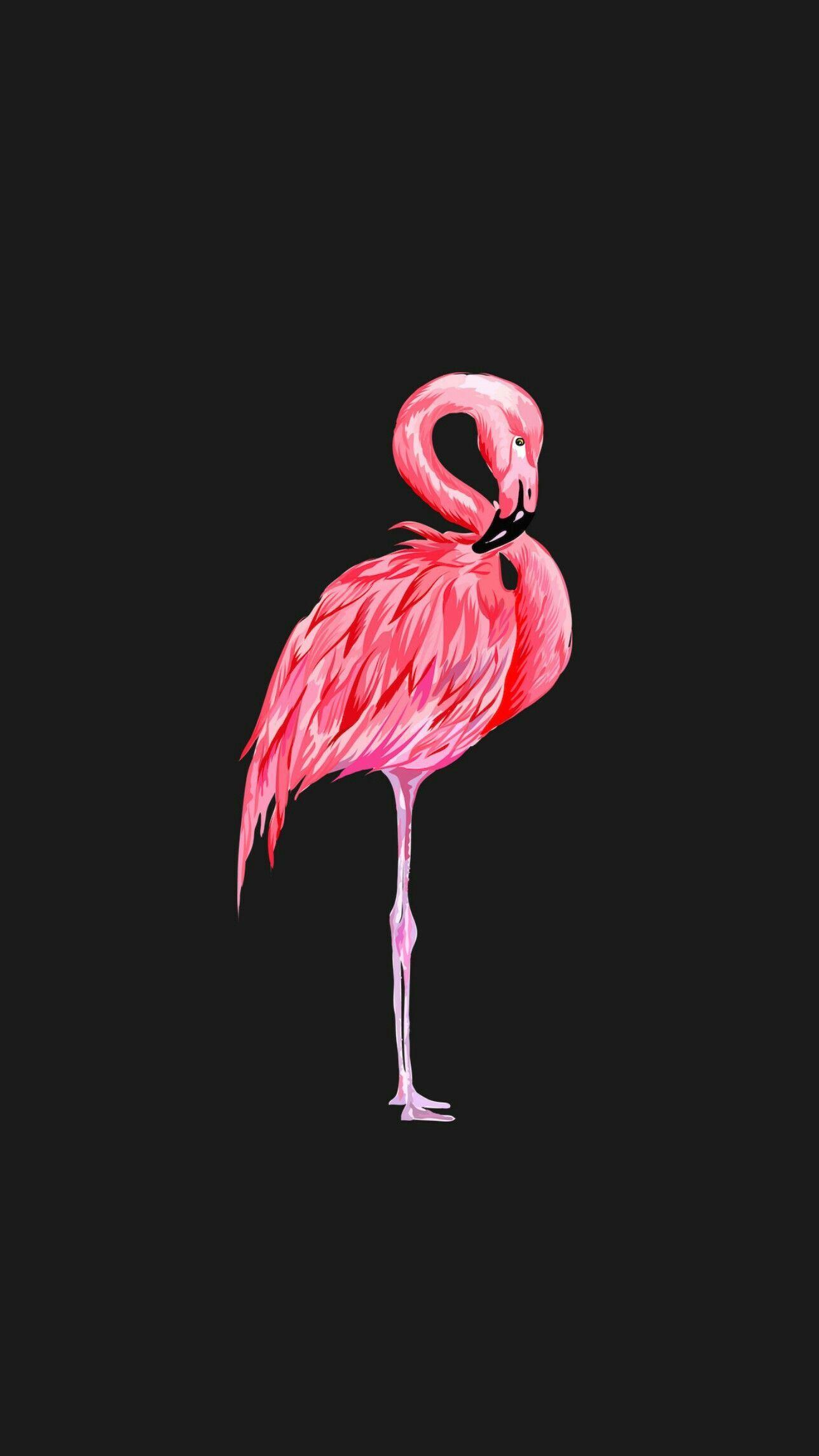 Photo of Hintergrund Flamingo –  Hintergrund Flamingo  – #animalbackgroundiphone #animalw…