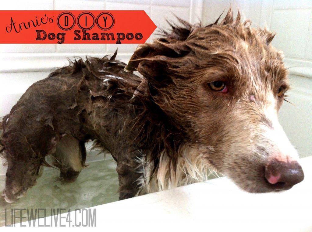 Annie S Diy Dog Shampoo Dog Shampoo Diy Dog Shampoo Diy Dog Stuff