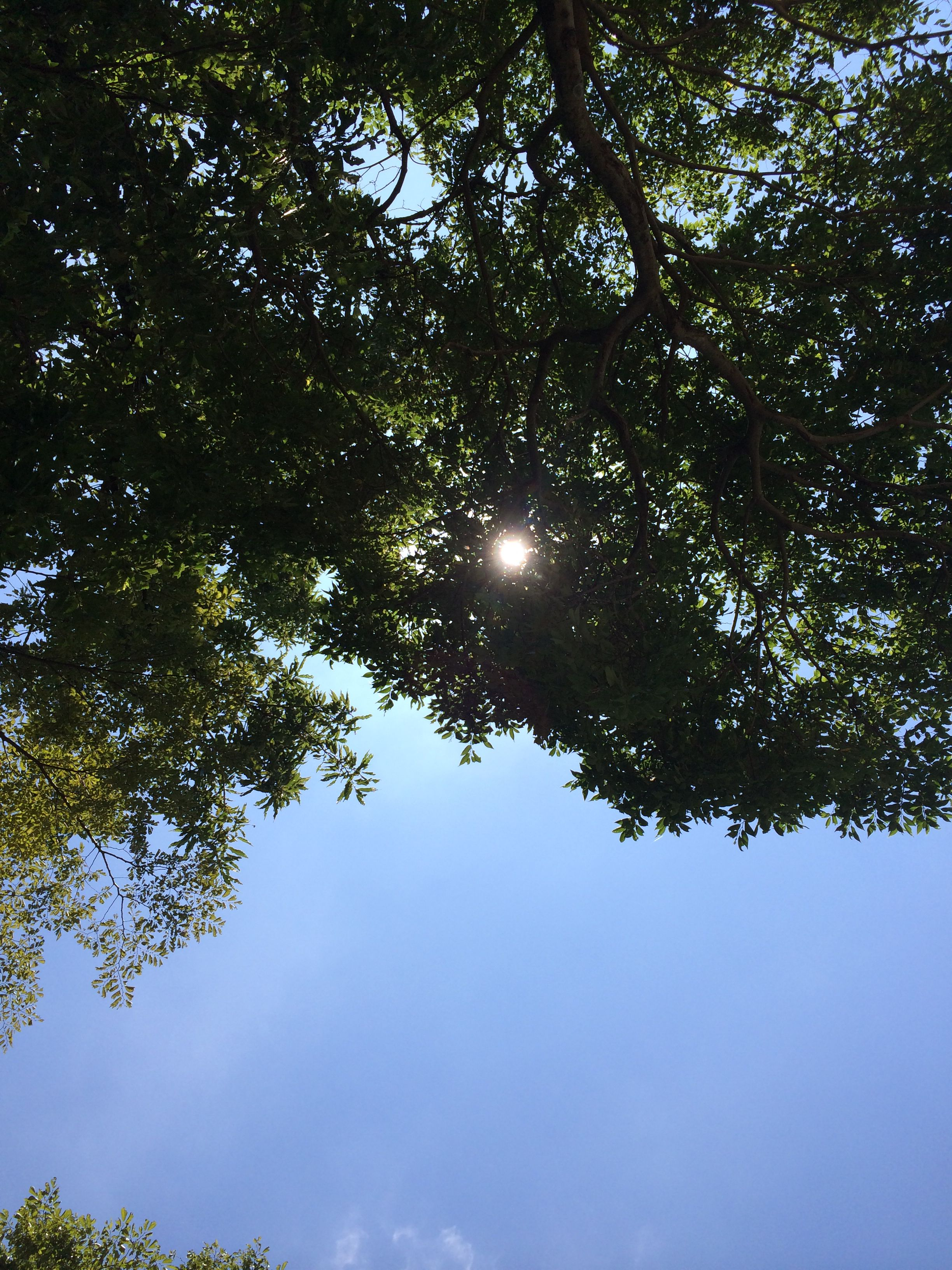 "Sunlight filters through the trees . In japanese, express in one word. ""komorebi"" 木漏れ日"