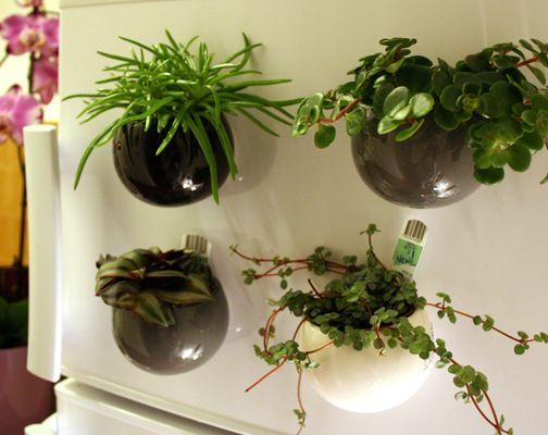 Nouvelle Photo Du Cache Pot Magnetique Avec Plante Joli