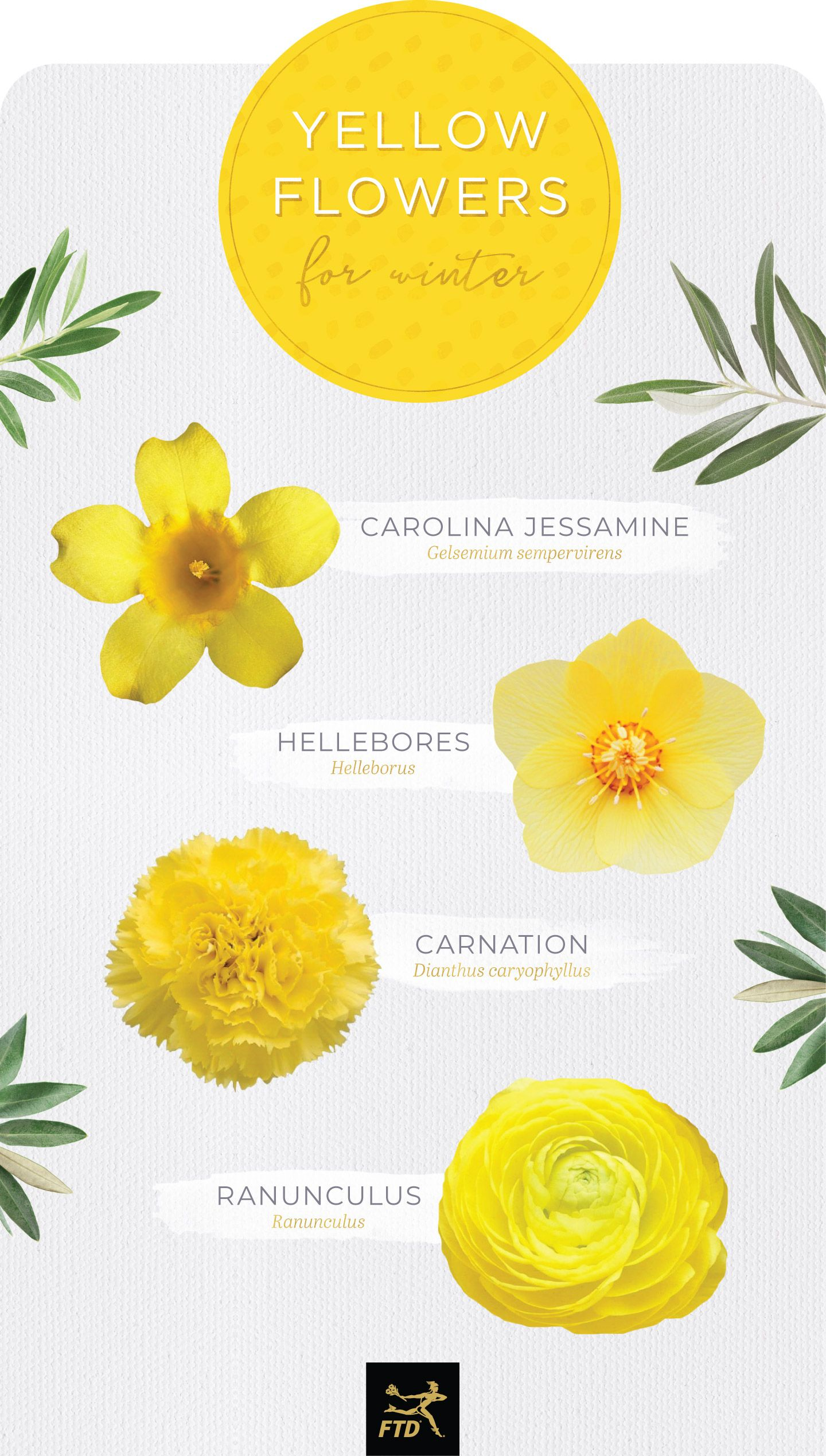 30 Types Of Yellow Flowers Ftd Com Yellow Flowers Small Yellow Flowers Types Of Flowers