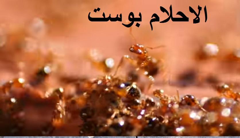 تفسير رؤية النمل في المنام للمرأة وللعزباء وللمتزوجة وللحامل وللرجل الاحلام بوست Food Movie Posters