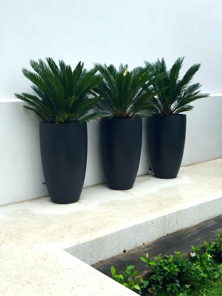 Contemporary Outdoor Plants For Pots Planters Tall Matt Black Planters With Cycads Nadia Gill Landscape Architect Modern Ou Plants Tall Planters Outdoor Plants