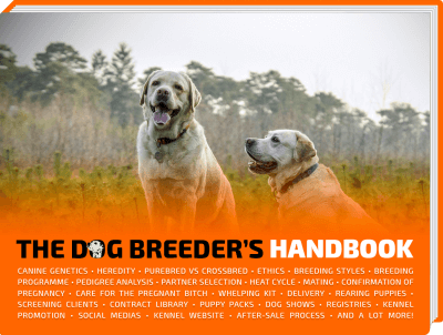 Having Your Dog Breeder Website Is A Must Nowadays We Explain You