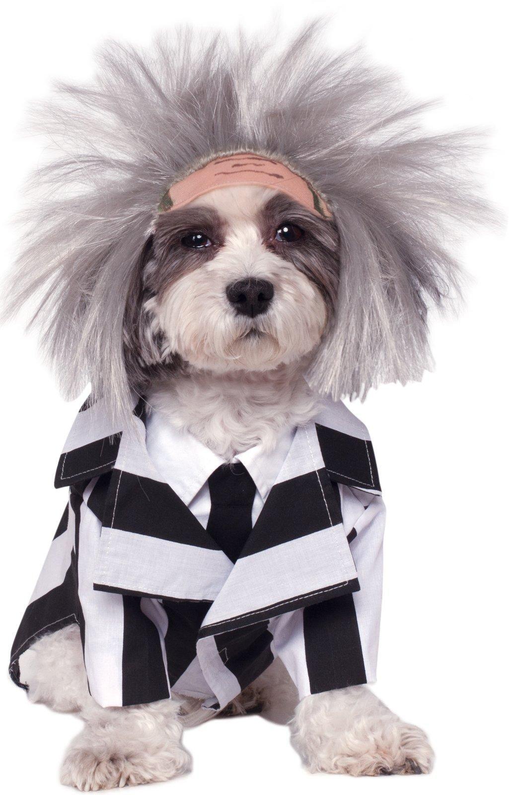 Beetlejuice Costume For Pets Pet Halloween Costumes Dog
