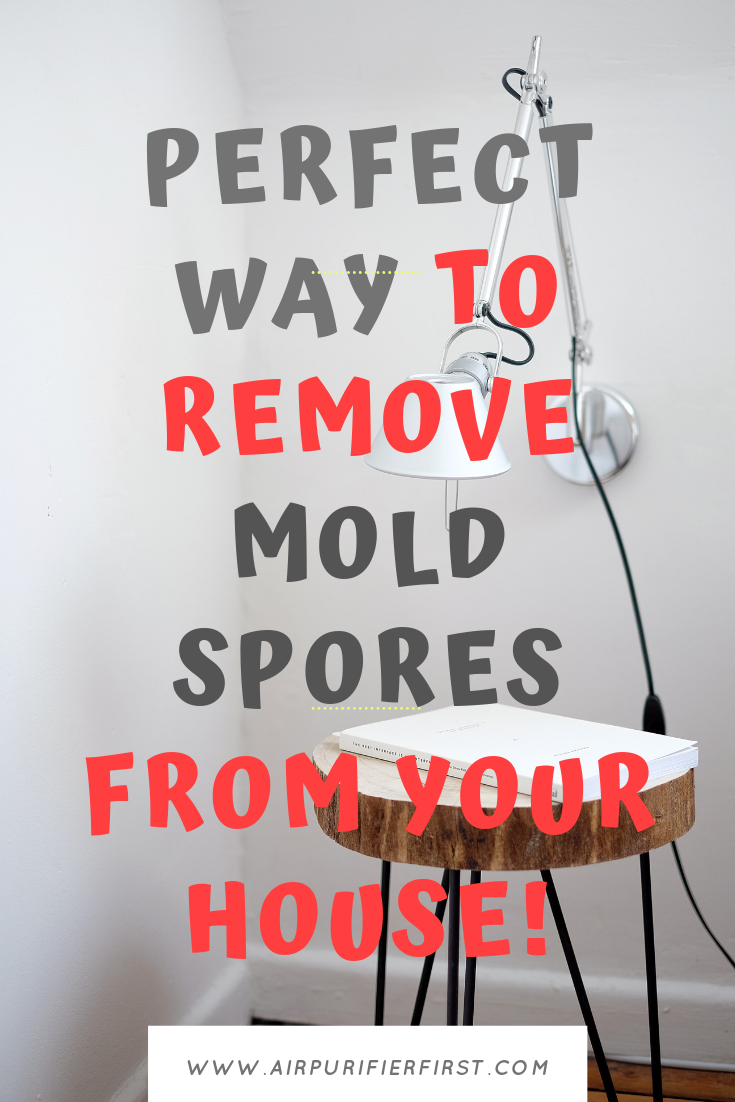 Perfect Way to Remove Mold Spores From Your House! How