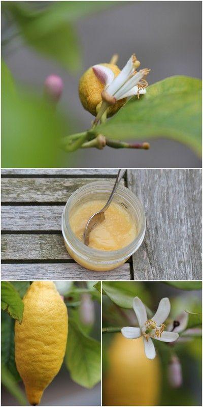LEMON CURD - EN ENGELSK KLASSIKER - Lemon curd