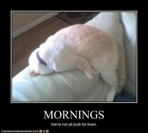 the older I get the less of a morning person I am.